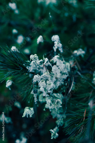 White Plant at Dusk Wall mural