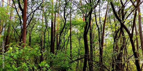 plakat Wald
