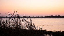 Silhouette Of Vegetation Against A Sunset Sky. Blurry Background Of Body Of Water. With Copy Space.