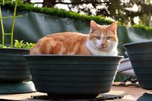 A Cat Lying In A Flower Pot In...