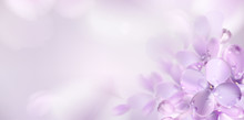 Floral Spring Background With ...