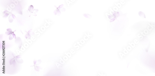 Poster Blanc Floral spring background with purple lilac flowers