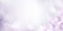 Soft Spring Background With Purple Blurred Flower Petals