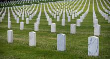 Hundreds Of White Grave Marker...