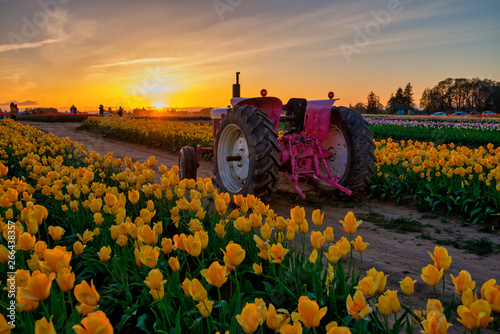Photo  Tractor on tulip field in Oregon