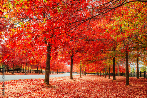 Foto auf Gartenposter Rot Beautiful Trees in Autumn Lining Streets of Town in Australia