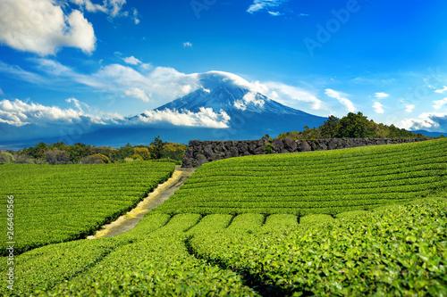 Fototapety, obrazy: Fuji mountains and green tea plantation in Shizuoka, Japan.