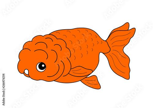 金魚 Goldfish らんちゅう Ranchu - Buy this stock
