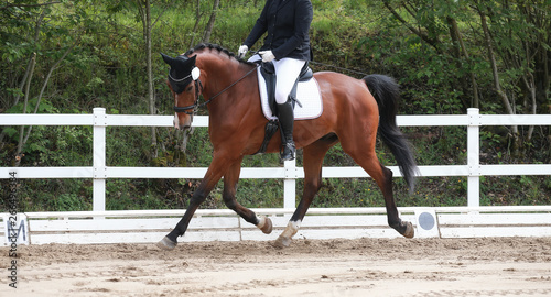Photo  Dressage horse with rider during a trot reinforcement in a dressage tournament