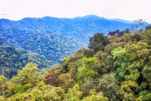 Fototapeta Tropical rainforest of Nyungwe National Park,Rwanda