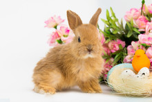 Little Bunny Rabbit With Decorated Eggs