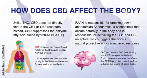 What does CBD do to your brain?