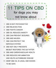 11 Tips On Cbd Oil For Dogs You May Not Know About