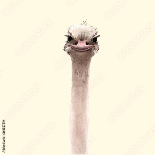Fotografía Watercolor ostrich vector portrait
