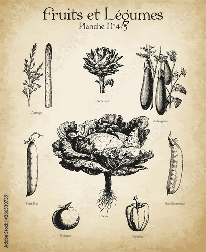 Plakaty botaniczne gravures-anciennes-fruits-legumes-n-4-5