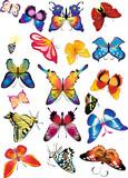 beautiful coloured butterfly pattern