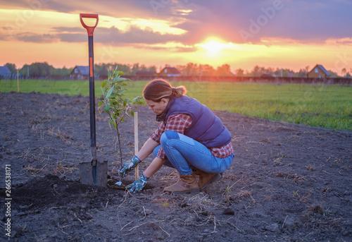 Pinturas sobre lienzo  a young woman planting an Apple tree in the garden near the house