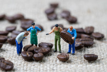 Coffee Beans Business Expert Or Professional Concept, Miniature People Figurine Worker Selecting Roasted Coffee Beans On Gunny Bag Background, Selecting Best Quality