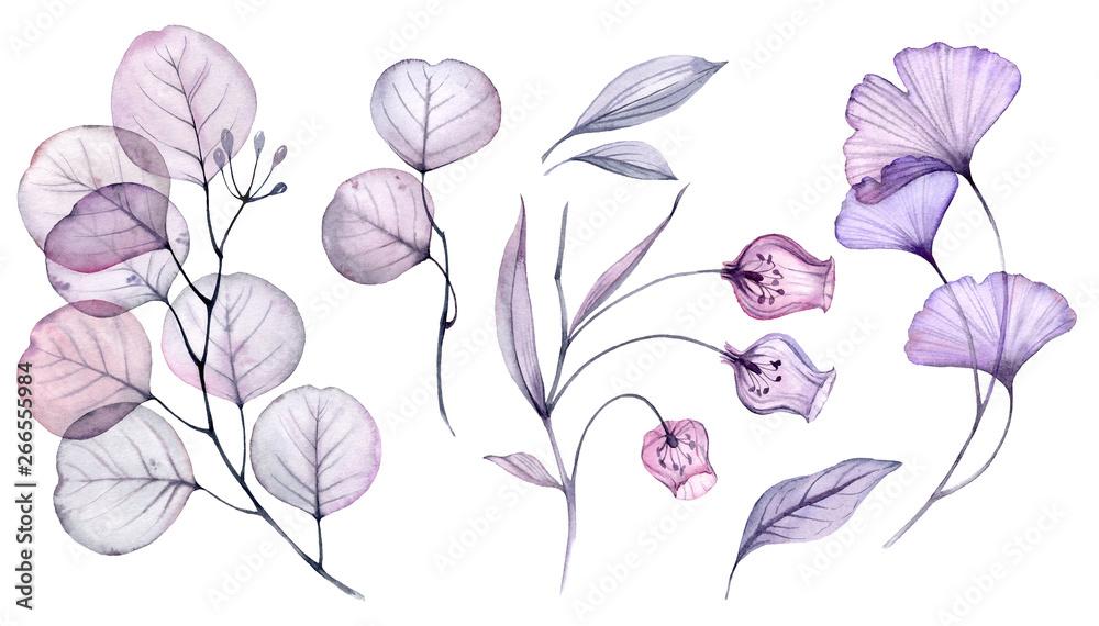 Fototapeta Transparent watercolor floral set bundle of roses, bellflower, buds, leaves, branches in pastel pink, grey, blue, violet, purple color vintage ornament, x-ray, wedding design, stationery print, frame