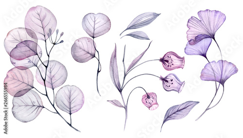 Transparent watercolor floral set bundle of roses, bellflower, buds, leaves, branches in pastel pink, grey, blue, violet, purple color vintage ornament, x-ray, wedding design, stationery print, frame