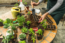 Planting Seeds In Biodegradable Pots