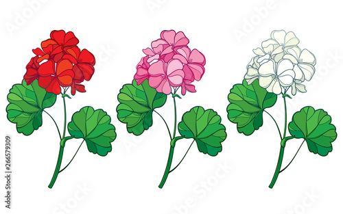 Set with outline Geranium or Cranesbills flower bunch and ornate leaf in red, pink and pastel white isolated on white background Wallpaper Mural