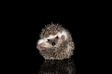 Studio Shot Of An Adorable Afr...