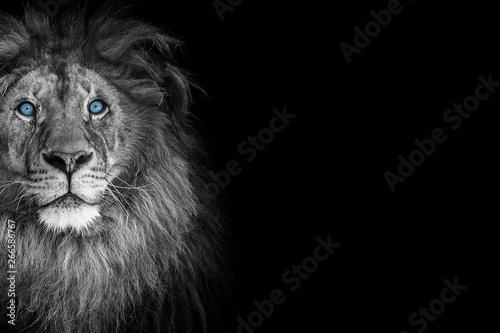 Foto op Plexiglas Leeuw Portrait of a beautiful lion and copy space. Lion in dark