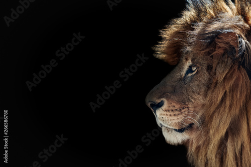Portrait of a beautiful lion and copy space. Lion in dark Wallpaper Mural