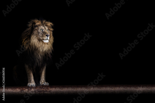 Poster de jardin Lion Portrait of a beautiful lion and copy space. Lion in dark