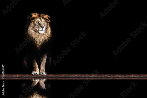 Fotografering  Portrait of a beautiful lion and copy space. Lion in dark