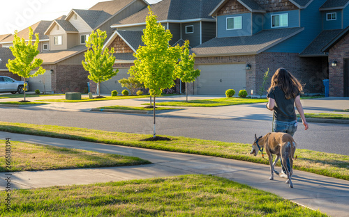 Young woman walking dog in modern residential houses neighborhood street in Bentonville, Northwest Arkansas, sunny flare day, fast growing city  lifestyle - 266588394