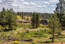 Spring Landscape At Hog Canyon