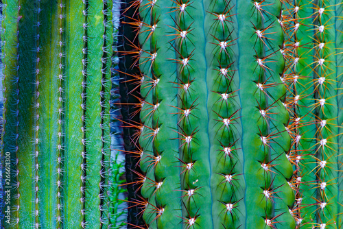 Poster Cactus germany,hambourg: cactus