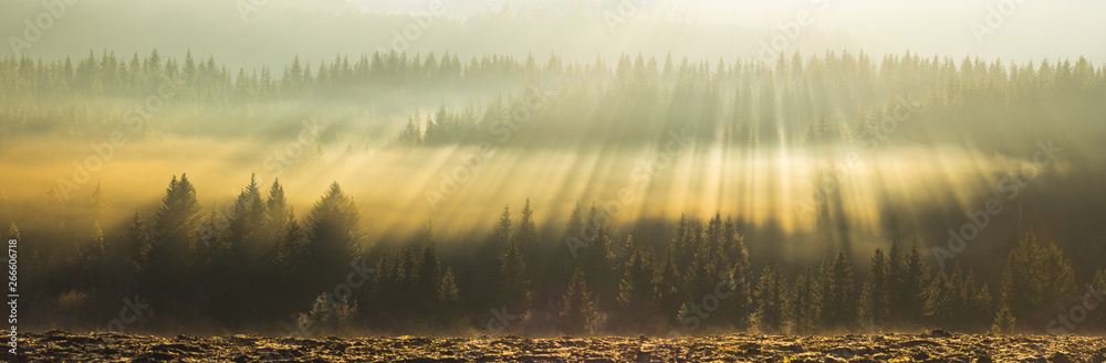 Fototapety, obrazy: Amazing light rays above the forest.