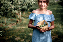 Beautiful Girl In A Blue Dress Picking Green Apples