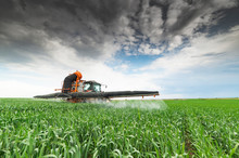 Tractor Spraying Wheat In Field