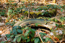 Old Tires In The Forest, Car Tires In The Woods