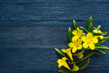 Flowering Yellow Trumpet Vine On Blue Stained Wood