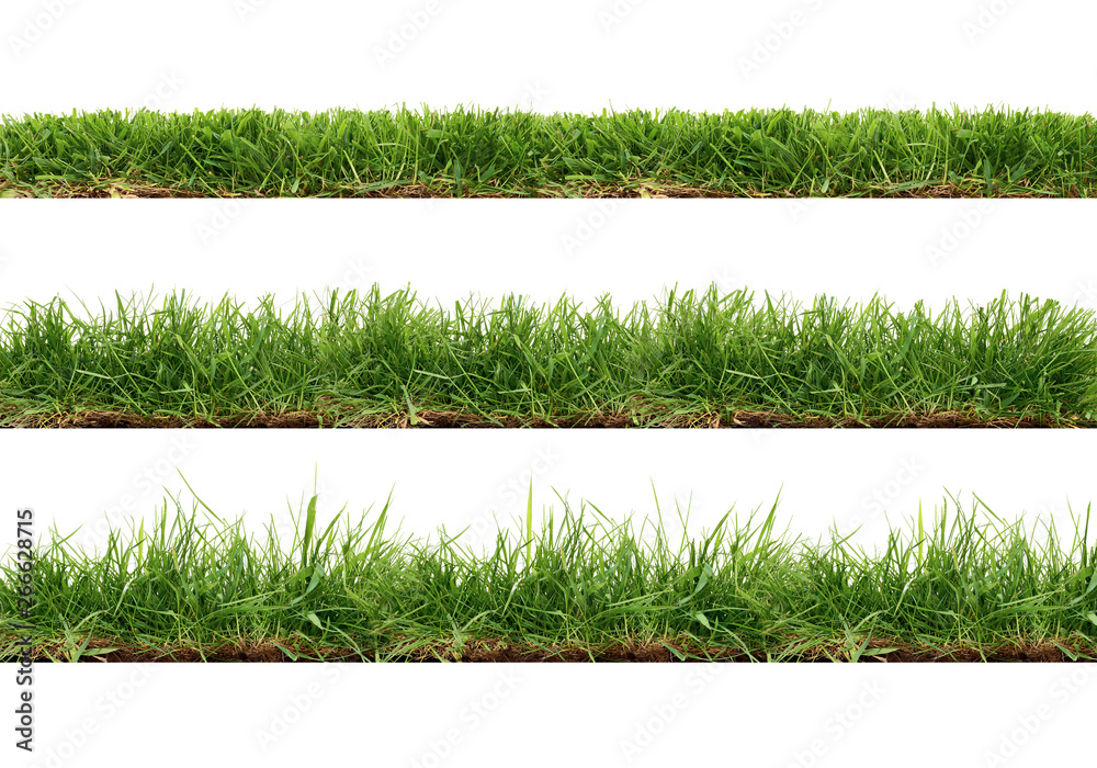 Fototapety, obrazy: A collection of real grass borders, short, medium and long grass edges isolated on a white background.