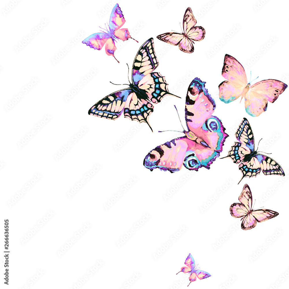 Fototapety, obrazy: beautiful pink butterfly,watercolor,isolated on a white