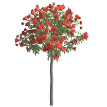 Rose Bush 3d Illustration Isol...