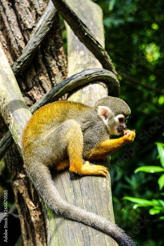 Monkeys in Singapore Botanic Garden Wallpaper Mural