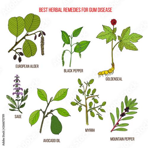 Photo Best herbal remedies for gum disease