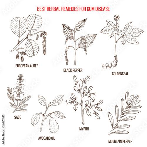 Best herbal remedies for gum disease Canvas Print