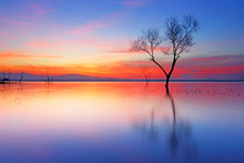 Dawn Light Over Silhouette Dead Tree On The Lake With Beautiful Sunrise