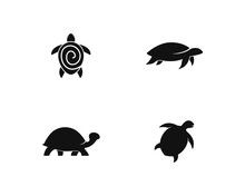 Turtle Icon Illustration Desig...