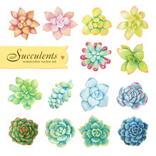 Vector Set Of Floral Elements In A Watercolor Style. Succulents Painted In Watercolor.
