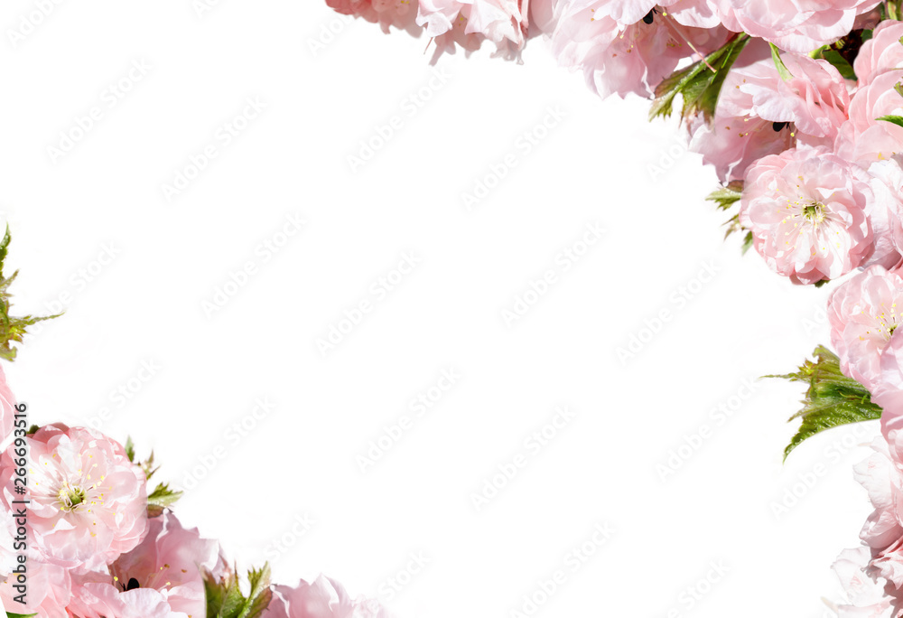 Fototapeta Pink flower frame isolated on white background