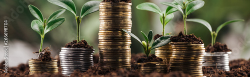 panoramic shot of silver and golden coins with green leaves and soil, financial growth concept